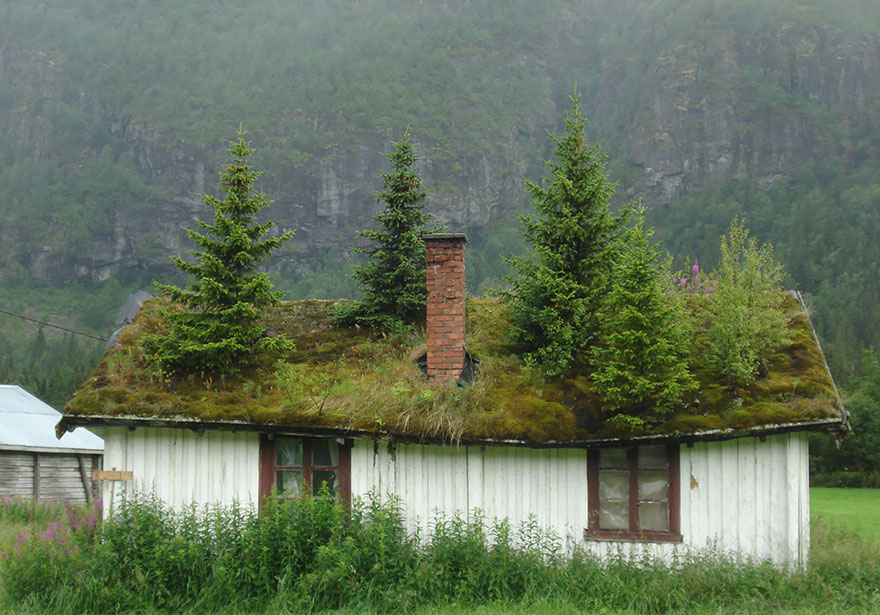 casa cu acoperis verde 7