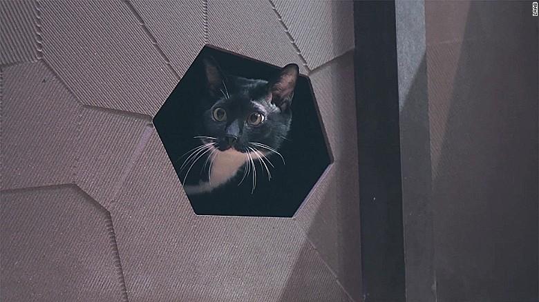 apartamente pentru pisici nisa in perete