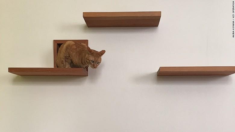 apartamente pentru pisici nise