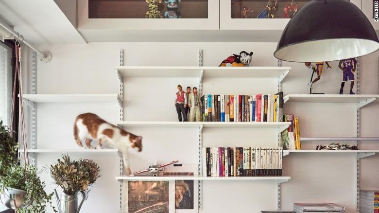 apartamente pentru pisici polite
