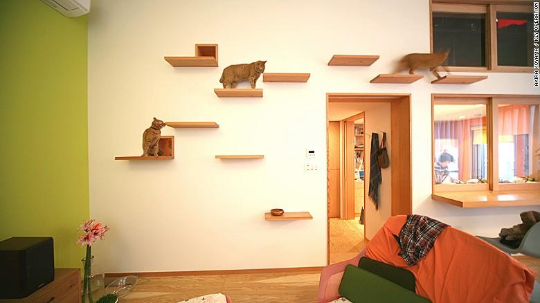apartamente pentru pisici polite din lemn
