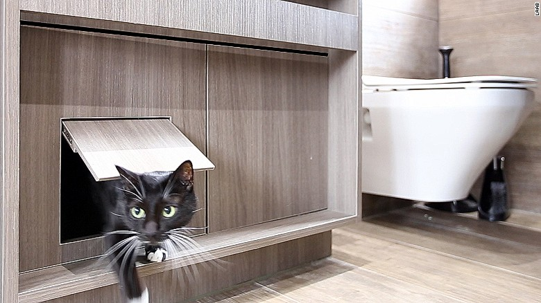 apartamente pentru pisici trapa