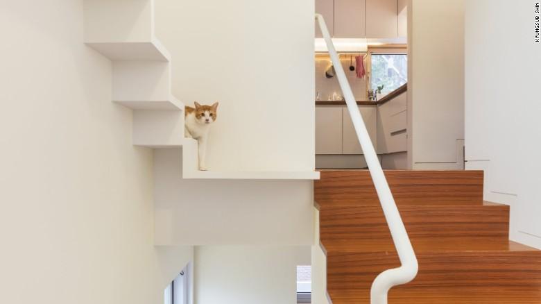 apartamente pentru pisici trepte din gips carton