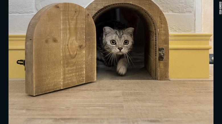 apartamente pentru pisici usa tip arcada