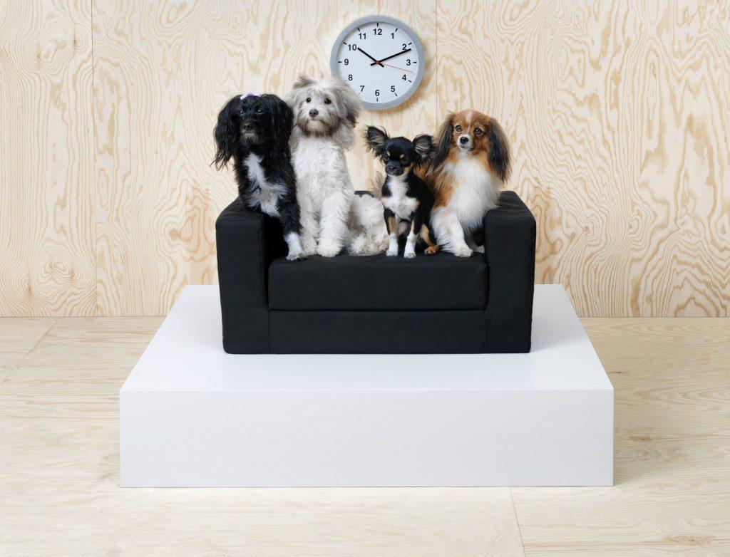mobilier pentru caini si pisici
