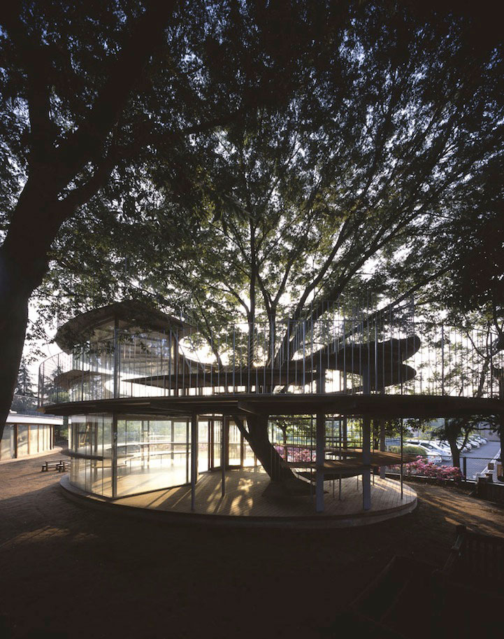 In Japonia: gradinita creata in jurul unui copac legendar