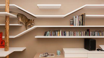 Apartamente pentru pisici – la moda in Asia